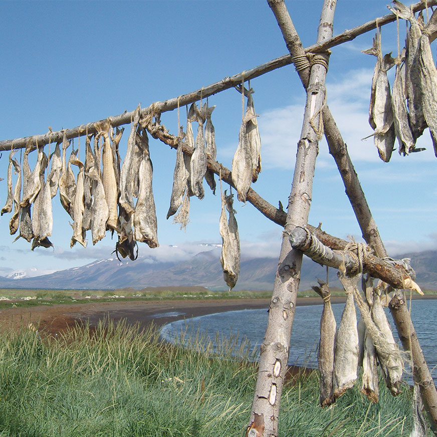 Fish hang from a stand made of wood with a beach and mountain in the background